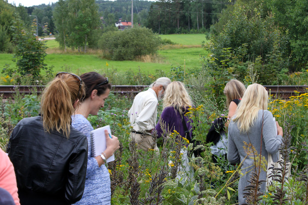 Råfrisk: 110814: Wild Food Walk with Dan Urbom