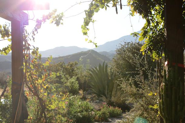 Råfrisk: 111005: California Beautiful