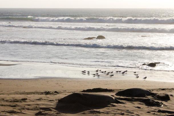 Råfrisk: 120104: Roadtrip/PCH/Monterey