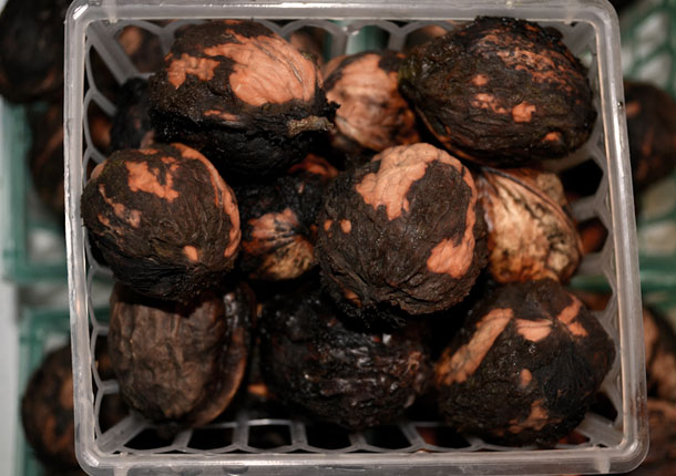 Råfrisk: 120823: Black Walnuts, Black Hands