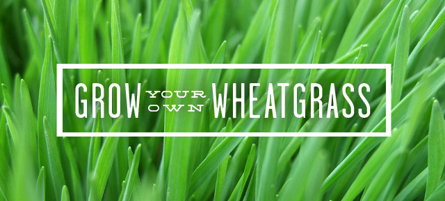 Grow and Juice Your Own Wheatgrass